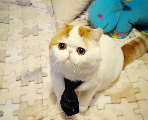 20 Manfaat Memelihara Kucing