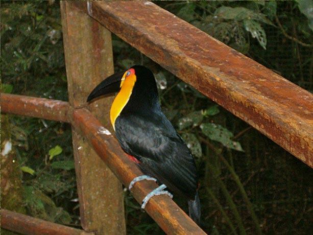Passeio imperdivel em Foz do Iguaçu: Parque das aves