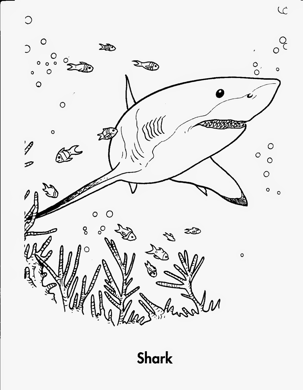 hammerhead shark coloring page - hammerhead shark skull coloring pages