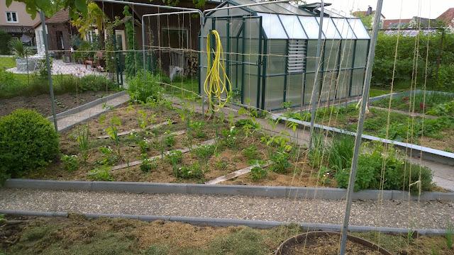 frisch gepflanzte Tomaten (c) by Joachim Wenk