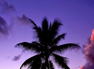 palm tree sunset paradise beach iphone wallpaper download