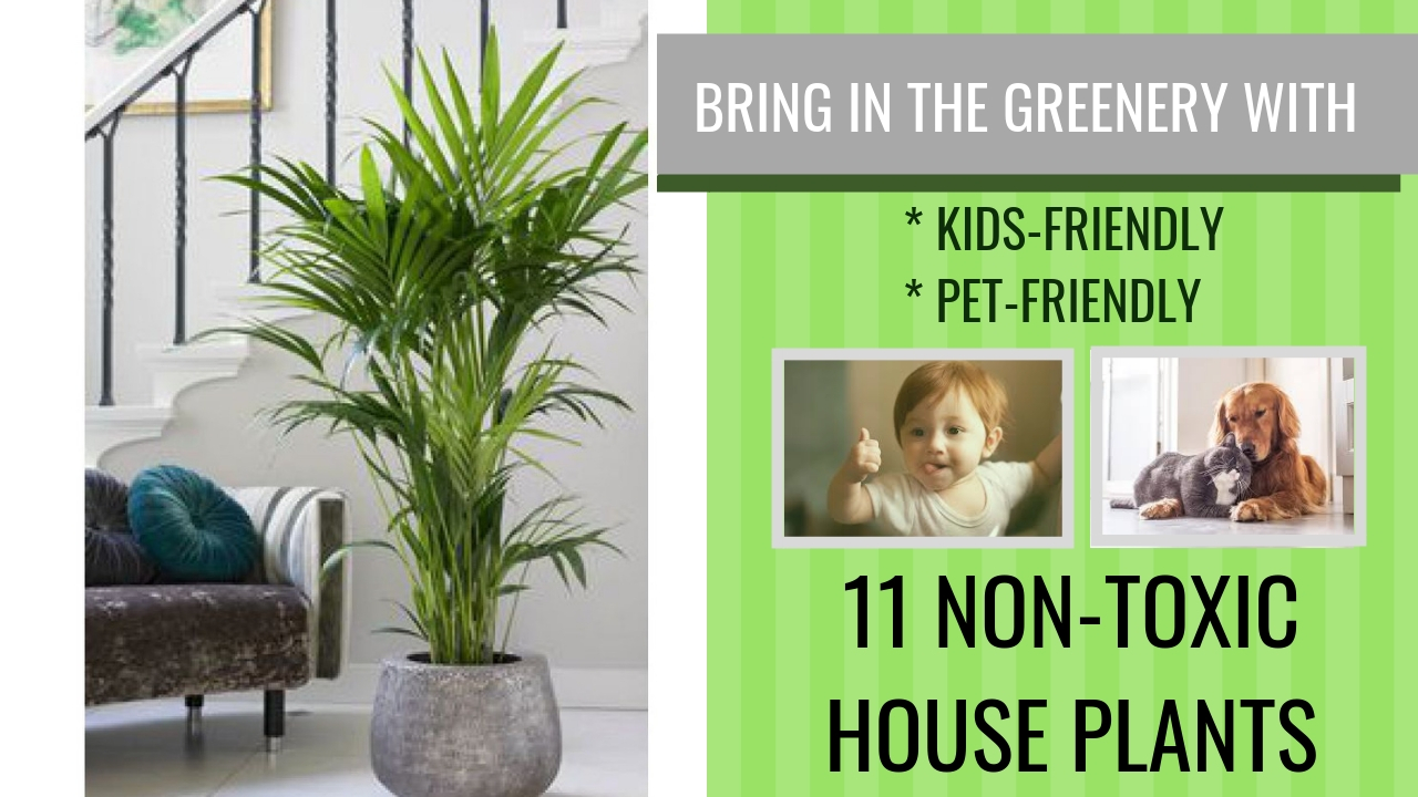 Trends For 2019 - Bring Greenery Indoors With 11 Non - Toxic House Plants