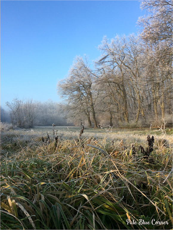 Winter, Photo