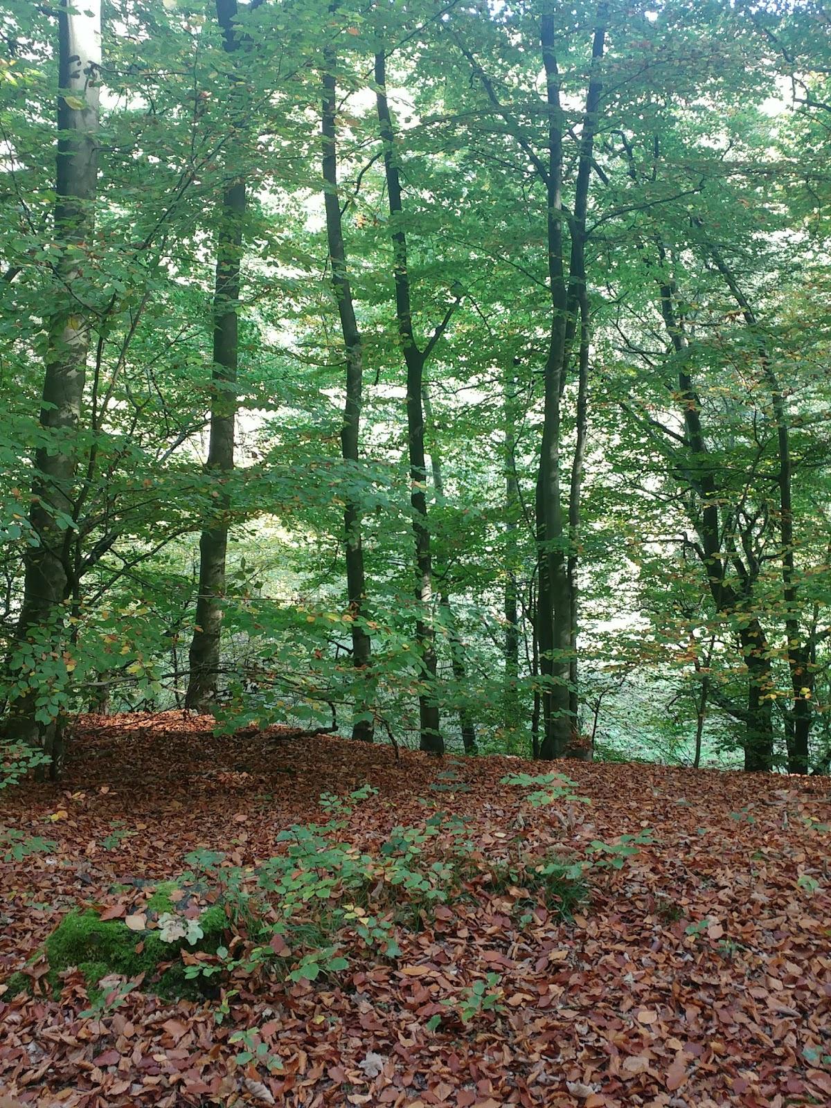 Herbst Haiku