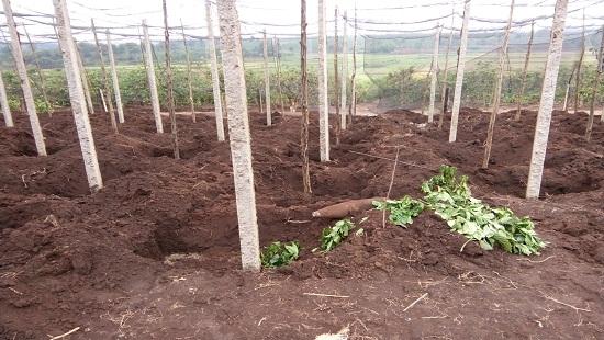 Gia Lai: Múc đất trồng tiêu, người dân phát hiện quả bom còn nguyên ngòi nổ