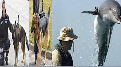 واقعة مقتل البغدادى, حيوانات تخدم الجيوش, الكلاب,