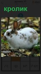 460 слов 4 в траве сидит белый кролик 22 уровень