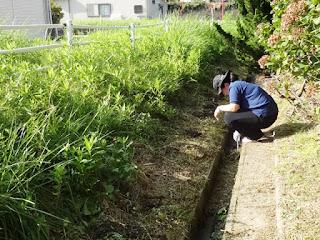 側溝に草や泥が溜まっているので、ミニスコップで掻き出します。