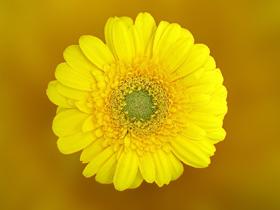 160619花(素材)