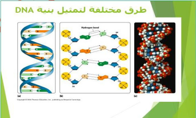 ملخصات وحدة ADN للسنة الثانية ثانوي علوم طبيعية