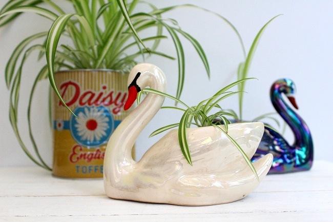 House Plants A Chlorophytum Comosum Trend Revival!