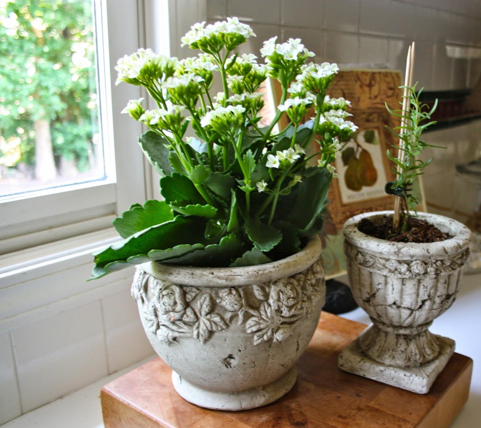 الحديقة المنزلية الصغيرة صور: بني و أخضر: أوعية نباتية مبتكرة تحتضن نباتات الزينة وتثري