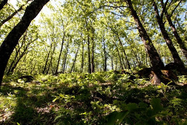 Sombras en los árboles