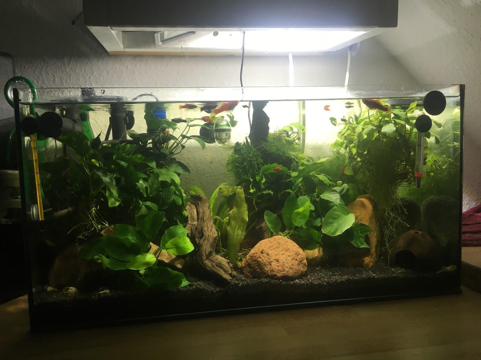 Meine aquarien mein 54 liter becken ohne algen abgebaut for Aquarium abdeckung