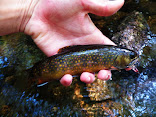 Protect RI Brook Trout