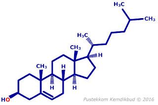 Struktur Molekul Kolesterol