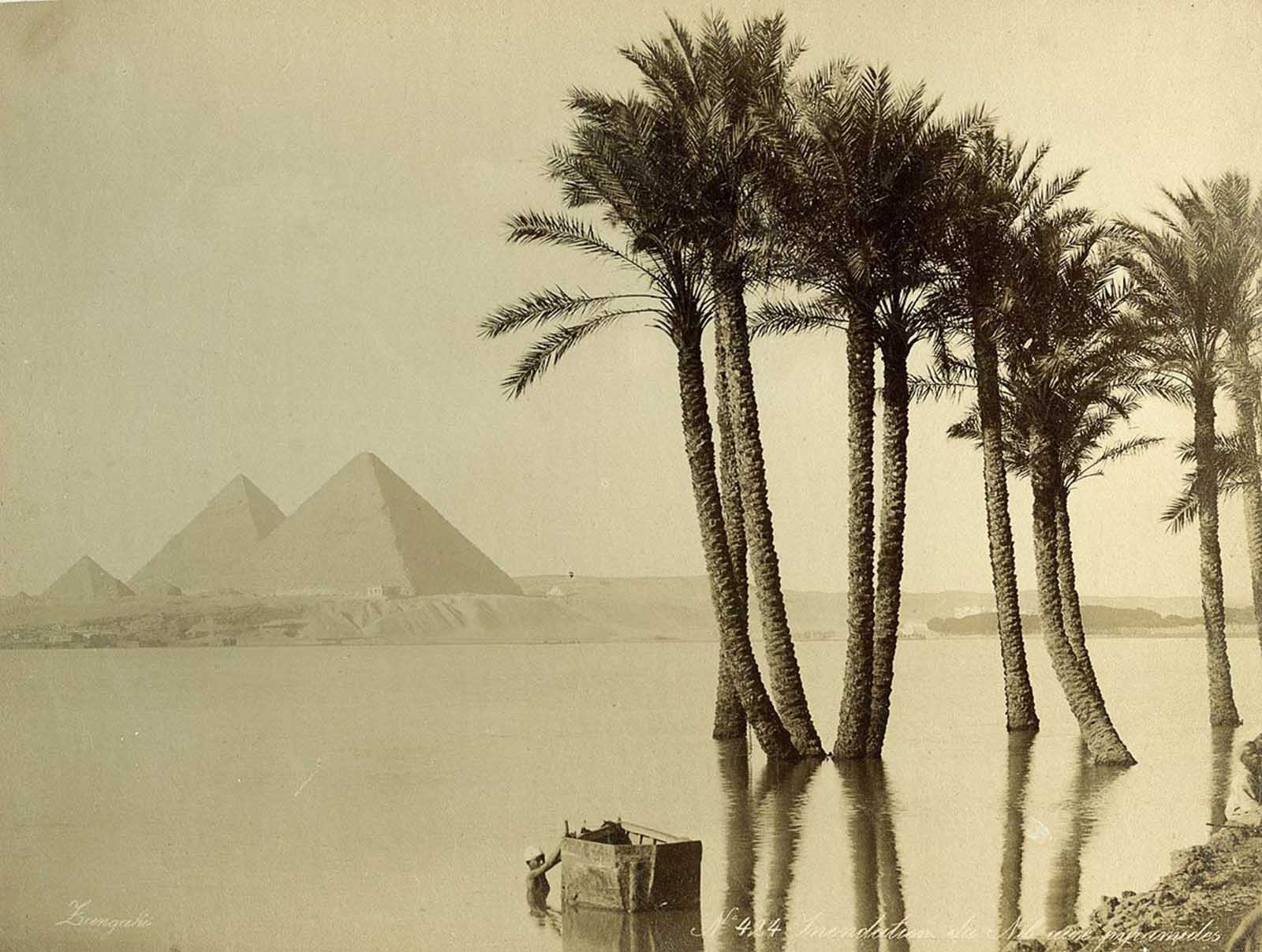 Flooded banks of the Nile.