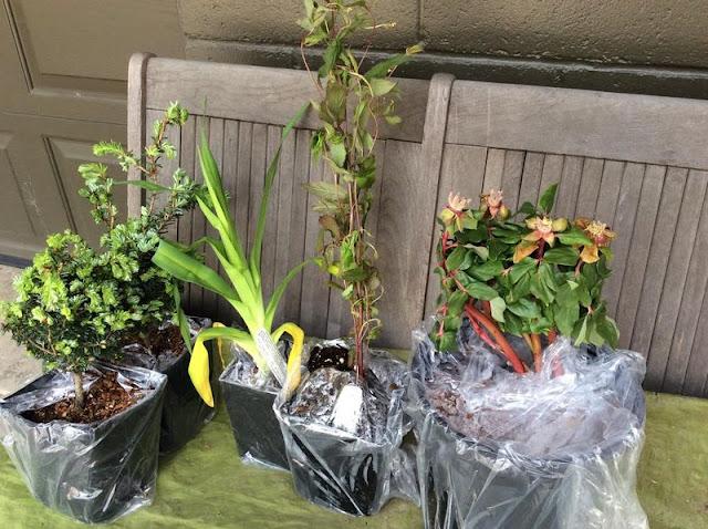 http://eachlittleworld.typepad.com/each_little_world/2016/04/mail-order-plants-odyssey-perennials.html