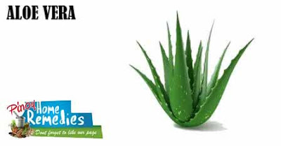 Home Remedies for Diabetes: Aloe Vera