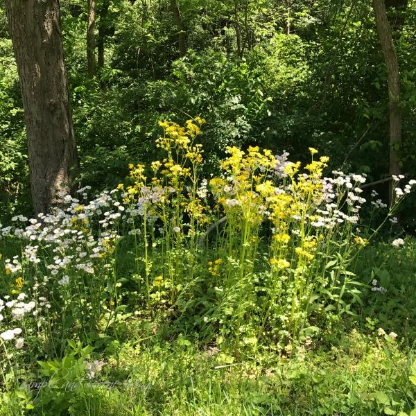 wild flowers woods
