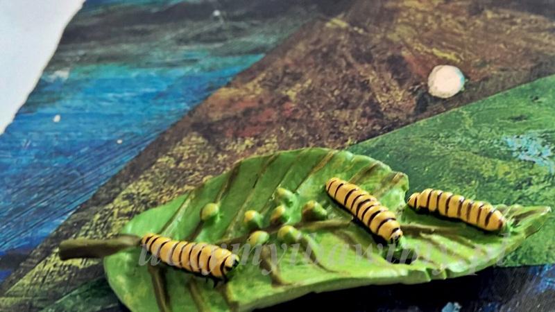Cykl życia motyla - Montessori