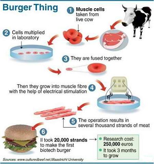 the future of food world 39 s first test tube burger. Black Bedroom Furniture Sets. Home Design Ideas