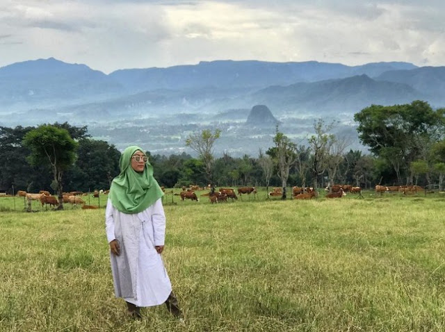 Tempat Wisata Padang Mengatas Peternakan Sapi Liar di Sumatera Barat