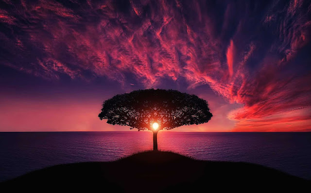Beautiful Landscape Nature Ocean  Sunset Tree Made Attractive View HD Wallpaper