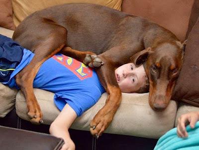 Un perro invasor y aburrido.