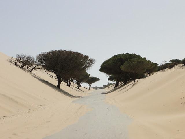 Carretera entre dunas y vegetación enterrada