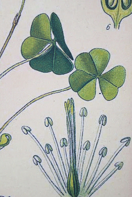 Decorate your home in spring color and St. Patrick's Day decor with these fun ideas from Itsy Bits And Pieces blog.