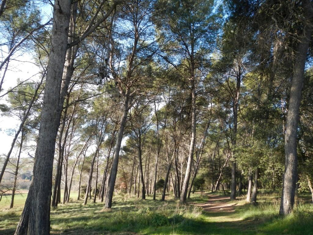 Bosc de Can Veire