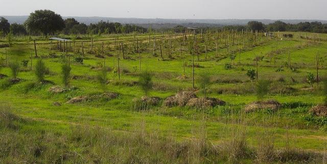 agricultura regenerativa vs extractiva