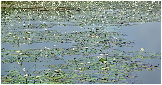 Carambolim Lake