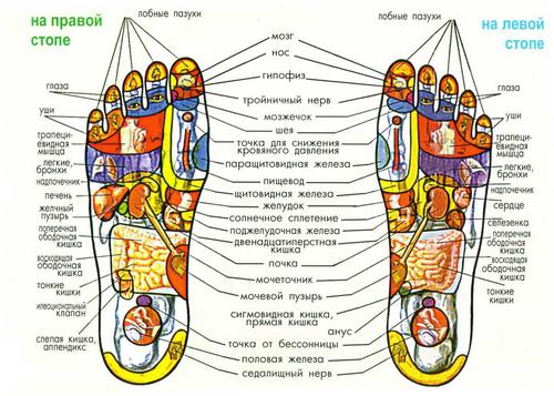 Су-джок-терапия, точечный массаж рук и ног, Су Джок