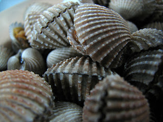 Benefits Mussels, Very Good For Health