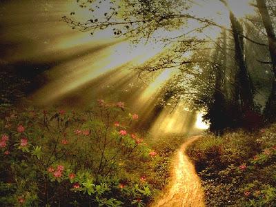 narrow-path-sun-rays-a.jpg