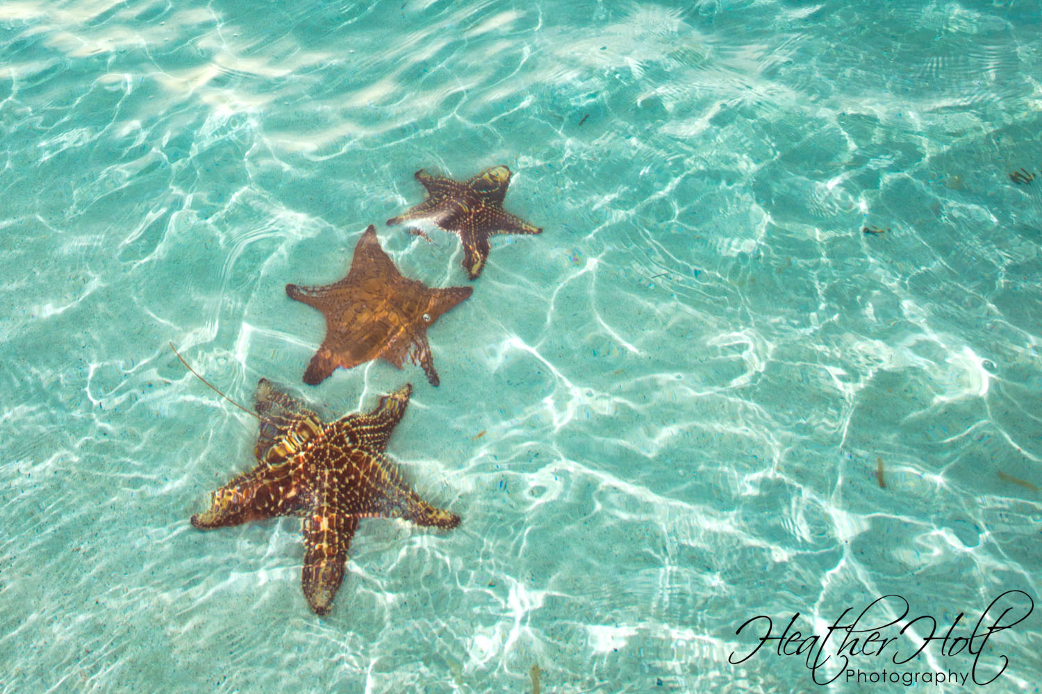 SILVER SANDS: Starfish Point, Well Worth the Trip!