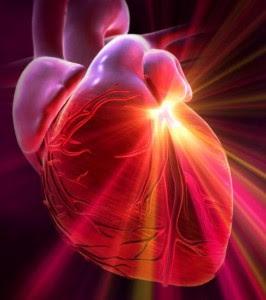 Сърцето и мозъка