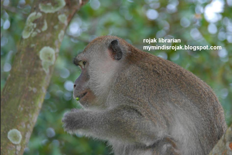 long-tailed macaque eating seeds