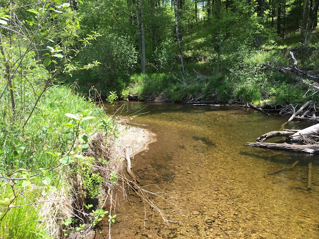 massachusetts small stream wild brook trout fly fishing