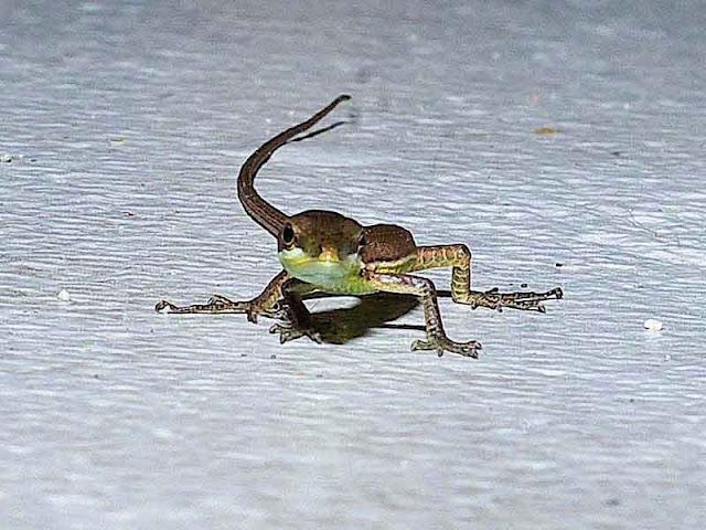 lizard on office floor