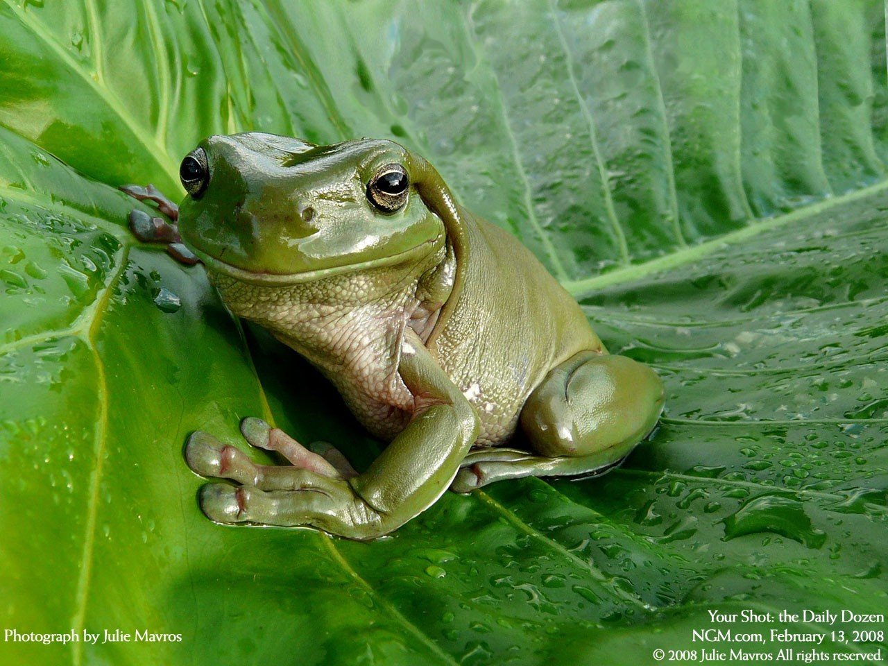 Cute Little Frogs In Photos | Funny And Cute Animals