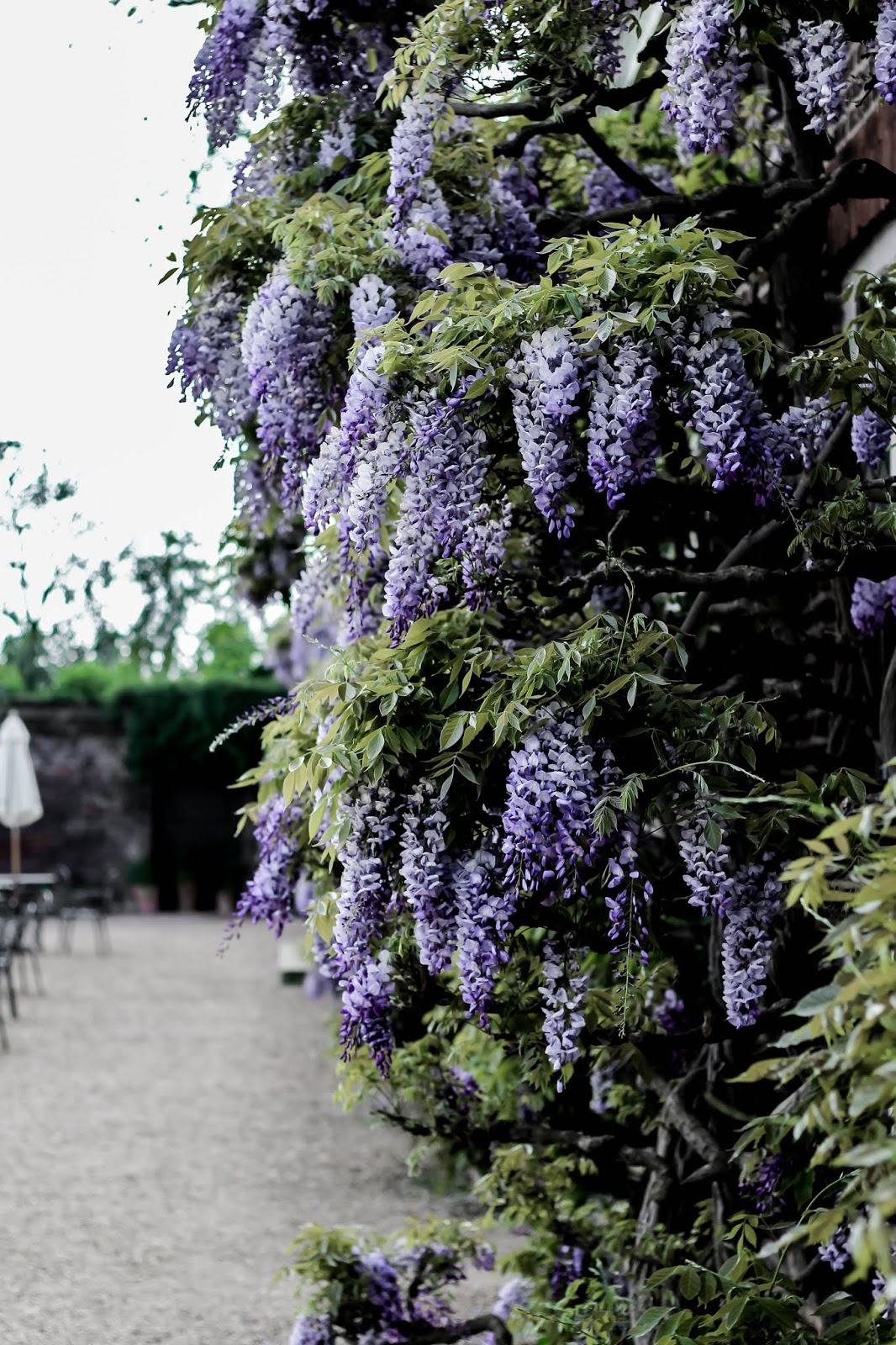 Pretty Wisteria Covered Place in England