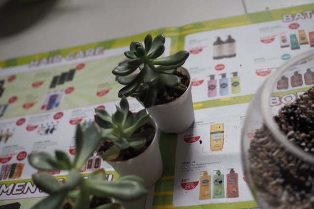 terrarium workshop review singapore