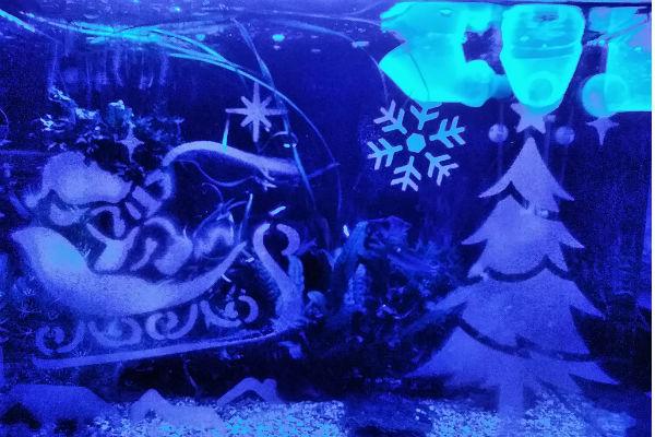 クリスマス装飾とライトアップが完了してイブの夜を迎えるばかりとなった我が家の水槽
