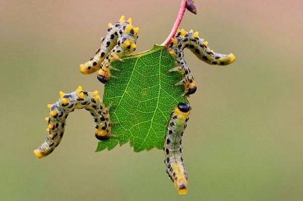 gusano plantas