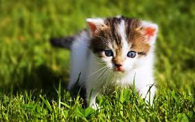 New Baby Cats Animal Hd Wallpaper26