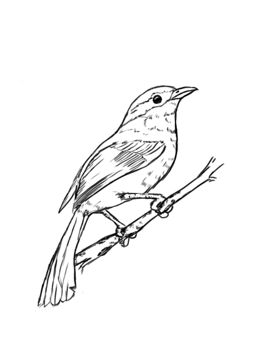 How To Draw A Bird - Draw Central