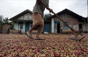 Disbunnak Bagikan Bantuan Terpal kepada Petani Kopi
